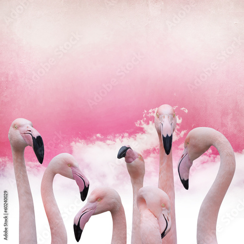 pink flamingo background