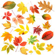 Collage of tree leaves isolated on white
