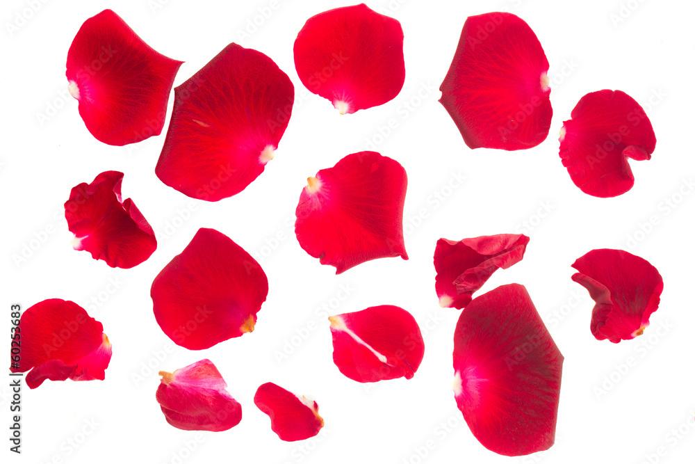 Fototapeta red rose petals