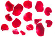 canvas print picture - red rose petals