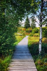 Fototapeta Summer landscape with wooden pathway