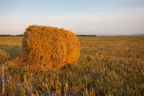 haystack field Tablou Canvas