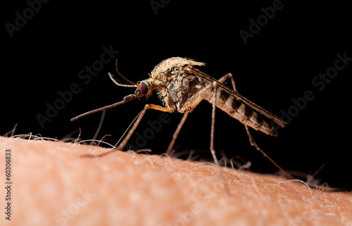 Bloodsucker mosquito on human skin, low point of view Canvas Print