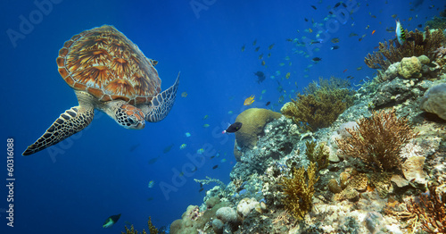 Foto op Aluminium Schildpad Sea turtle swimming over the coral reef.