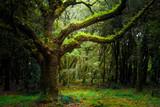 Drzewo na środku lasu