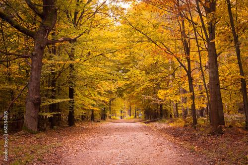 Canvas Prints Autumn Las jesienią