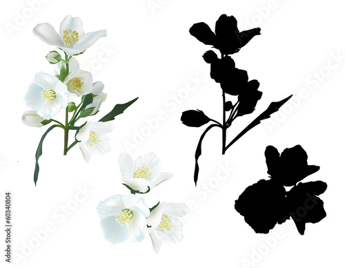 Photo jasmin flower branches and shadows isolated on white