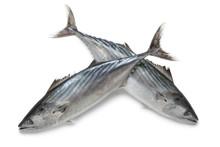 Fresh Bonito Fishes