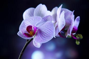 Fototapeta piękne orchidee