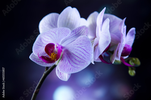 Keuken foto achterwand Orchidee Beautiful orchids