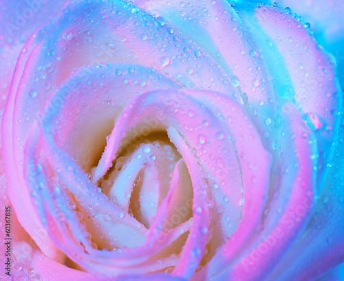 abstrakta-mokry-rozany-tlo
