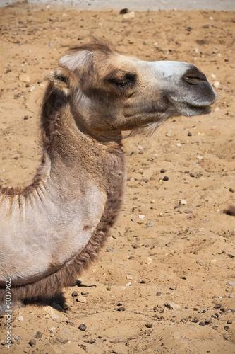 Tuinposter Eekhoorn Camel
