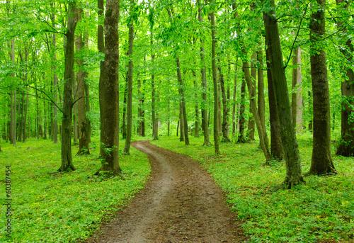 Spoed Fotobehang Weg in bos Path in forest