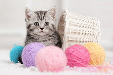Kitten In A Basket With Balls ...