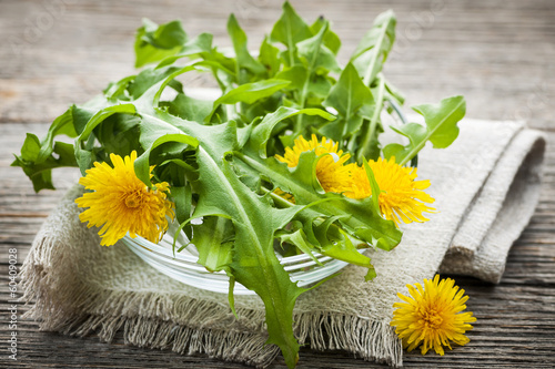 Printed kitchen splashbacks Dandelion Dandelions greens and flowers