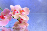 Dojrzała orchidea z kroplami wody
