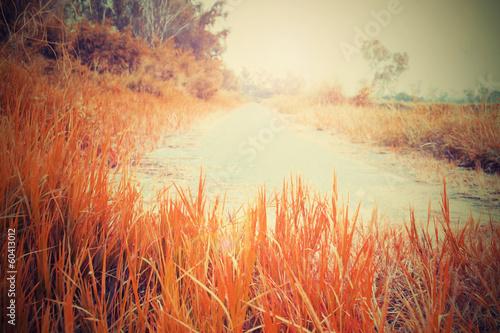 Fototapeta orange meadow Streets obraz na płótnie