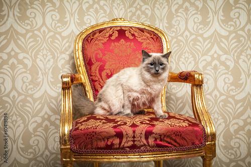 Foto op Aluminium Imagination kuschel Katze