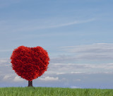 Fototapeta Natura - Roter Herzbaum