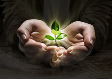Plant Light In The Hands, Concept Of New Life