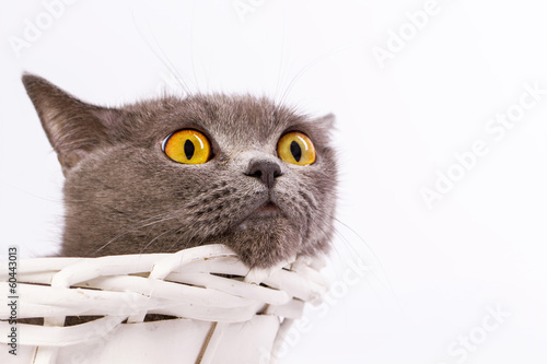 Keuken foto achterwand Kat The cat is lying in a basket on a white background