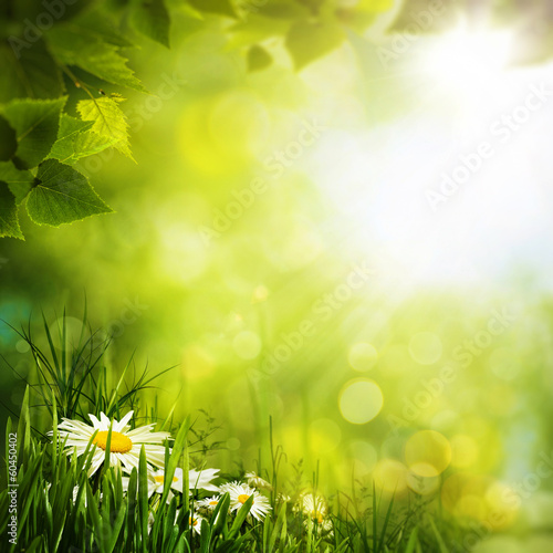 Fotografie, Obraz  Daisy flowers on the meadow, seasonal backgrounds for your desi