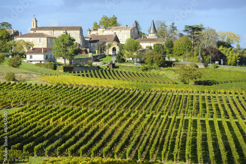 Canvas Prints Pistachio Vineyards of Saint Emilion, Bordeaux Vineyards