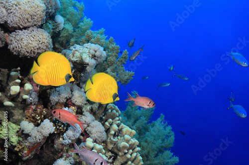 Staande foto Koraalriffen Colorful fish in the reef of the red sea