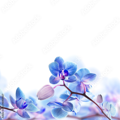 Fototapeta na wymiar Floral background of tropical orchids
