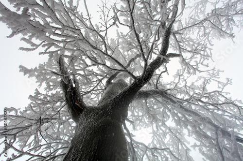 niebo-slonca-przez-galezie-drzewa-zima-od-dolu