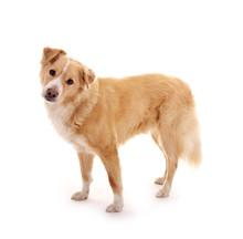 Hund – Stehend