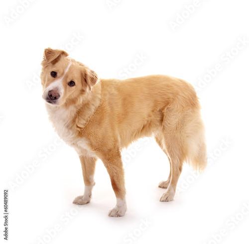 Leinwand Poster Hund – stehend