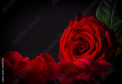 Natural red roses background Poster