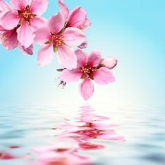 Panel SzklanyPeach flower,water background