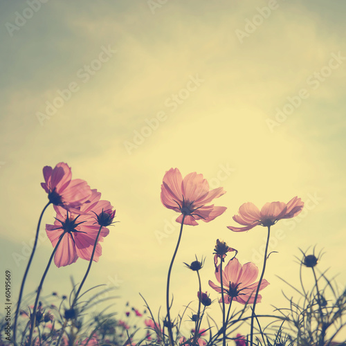 Deurstickers Retro Vintage Cosmos flowers in sunset time