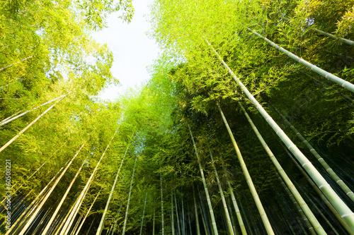 Recess Fitting Zen bamboo forest