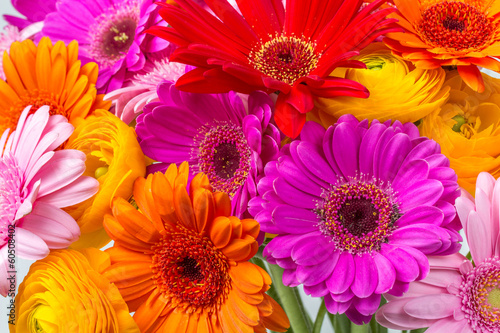 Photo Stands Gerbera Frühlingsblumen