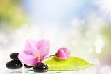 Fototapeta Kuchnia - Black spa stones and flower on colorful background