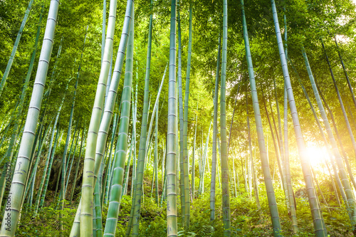 Poster Bamboe Bamboo forest with sunlight