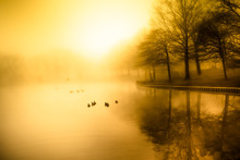 Fog And Golden Morning Light O...