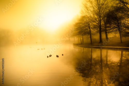 Fotografie, Obraz  Fog and golden morning light over duck pond
