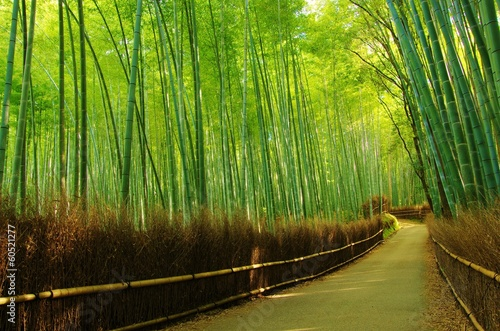Foto op Plexiglas Bamboe LANE into the bamboo forest 竹林の小路