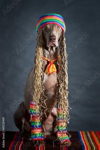 Fotografie, Obraz  weimaraner dog