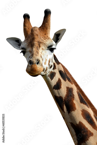 Foto op Canvas Giraffe giraffe isolated on white background