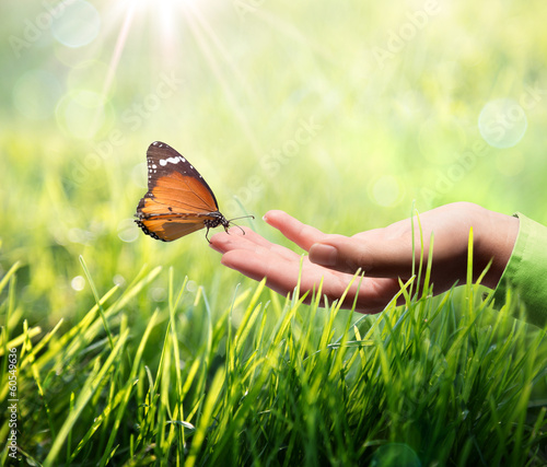 Poster Vlinder butterfly in hand on grass