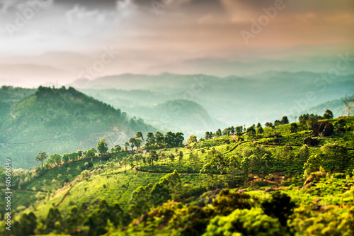 Tea plantations in India (tilt shift lens)