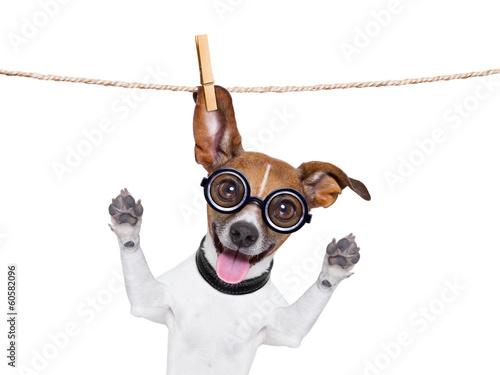 Deurstickers Franse bulldog dumb crazy dog