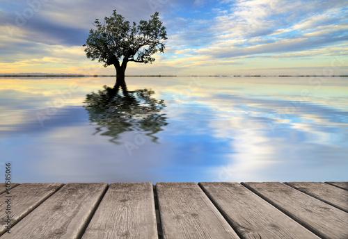 reflejos naturales en el agua