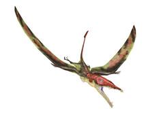 Eudimorphodon Flying Prehistoric Reptile, Photorealistic Represe