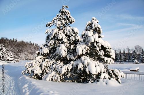 Schneebedeckte Tannenbäume in Winterlandschaft © alisseja